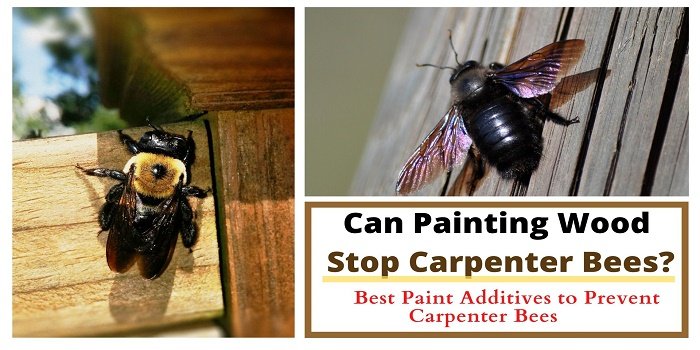 will painting wood stop carpenter bees
