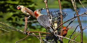 woodpecker deterrent paint