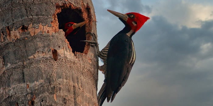 woodpecker deterrent paint